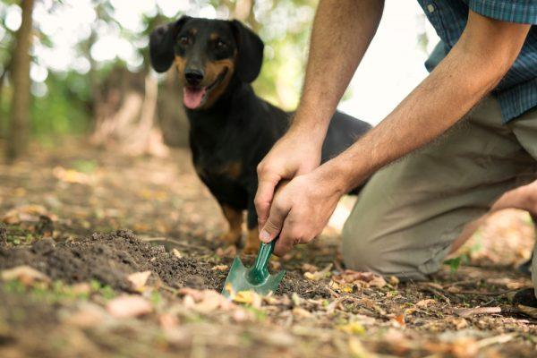 Itāļu Suns Meklē Trifeles